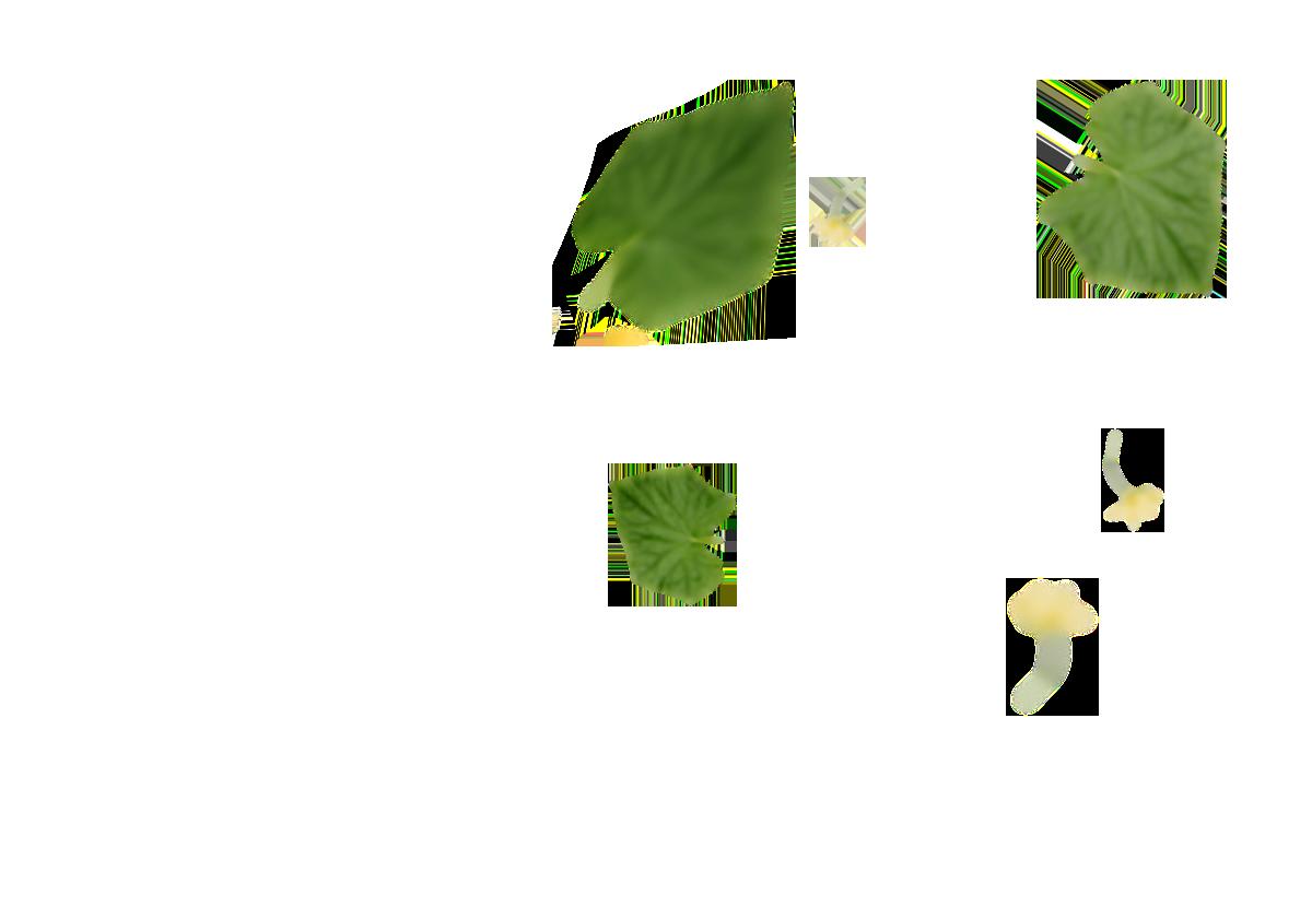 Minigurken - Hintergrund