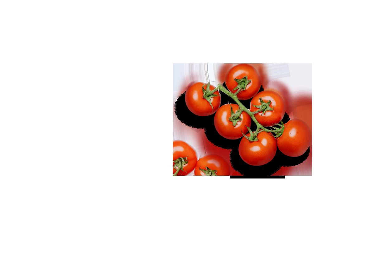 Tomaten - Vordergrund